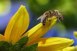 Contrôle de ruches (formation pratique) @ au rucher de M. Jean Pierre HUTEAU à BIRLENBACH
